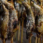 鮎の塩焼きの食べ方!骨を取ってきれいに食べる方法や旬の時期はいつ?
