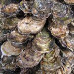 牡蠣の旬の時期はいつ?産地・種類ごとの違いや旬のおいしい食べ方も