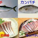 カンパチとハマチとブリの違いは?名前や出世魚か、旬の時期や味、栄養やサイズも